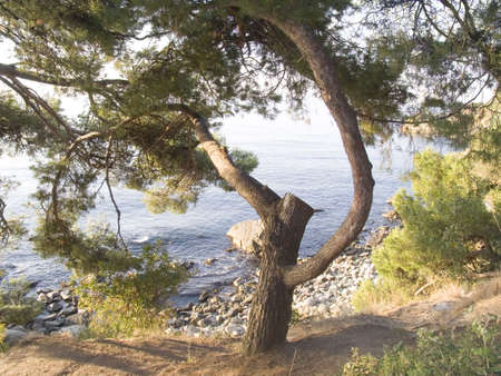 Old park on seacoast in Crimea photo