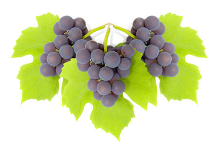 Some clusters of a grapes on green to a leaf. The isolated image on a white background