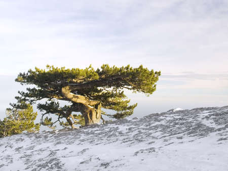 Huge old tree in mountains on a background of the sky