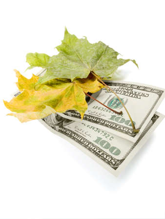 Autumn leaves and the American dollars on a white background