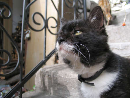 pearly gates: Portrait of a cat in a court yard