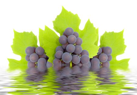 Some clusters of a grapes on green to a leaf. The isolated image on a white background. Reflection in water