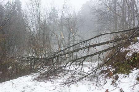 sleet: Snowy path with trees broken by sleet