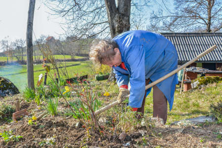 Elderly woman wearing blue coat  gardening with a hoe