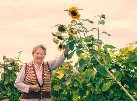 Happy senior woman holding a sunflower plant in a vineyard photo