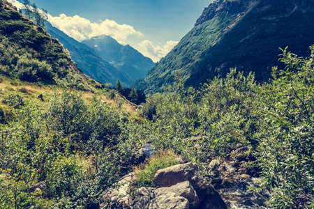 lust: Glacier valley. Lust vegetation growing around a stream. Stock Photo