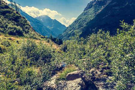vegetation: Glacier valley. Lust vegetation growing around a stream. Stock Photo
