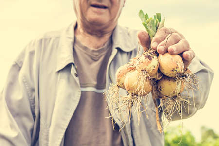 holding close: Senior man holding onions. Close up of onions.