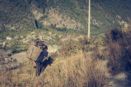nepali: Farmer carrying firewood. Nepali carrying basket of cooking firewood.