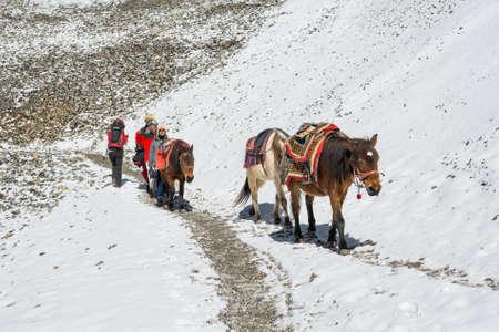 Thorong La, Nepal - 16. Oktober: Sherpas Pferde hinunter einen Bergpass auf 5416 m, am Oktober 2016 Annapurna Circuit Trek in Nepal in Herden leben.