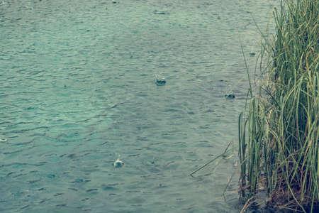 Rain drops on lake surface.