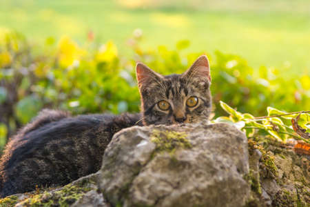 Cat hiding behind a rock. Stock Photo
