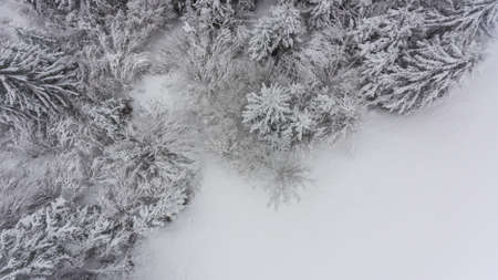 Drop down view of snow covered forest.
