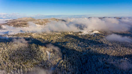 Aerial view of winter forest.
