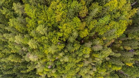 Drop down view of tree tops.