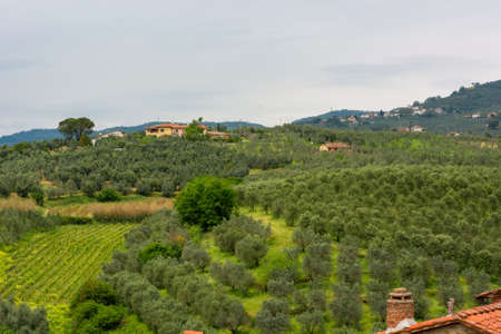 Traditional vineyard surrounded by lush vegetation covering rolling hills. Imagens