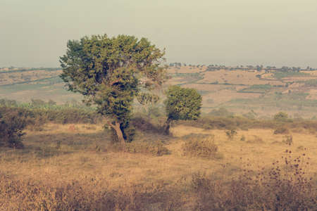 Spectacular landscape of savannah covering hills during dry season. Stock Photo - 115803725
