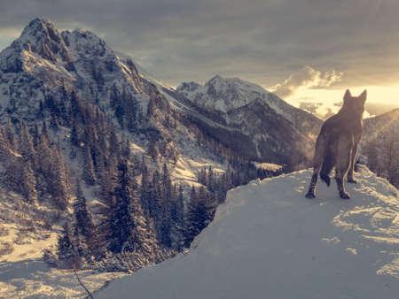 Spectacular winter mountain landscape illuminated by setting sun. Stockfoto
