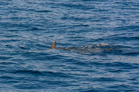 Dolphins swimming in waste blue ocean - spectacular experience of encountering sea animals. Foto de archivo