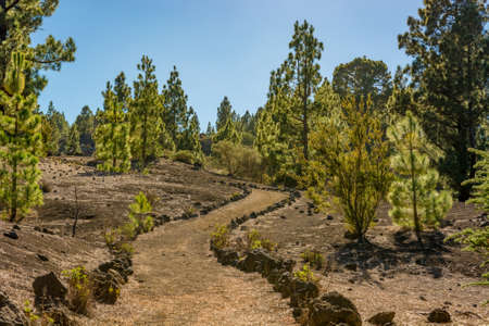 Wide footpath leading through spectacular volcanic landscape. 写真素材