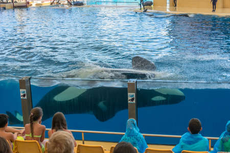 Aquarium visitors watching orca whale swimming in large tank.