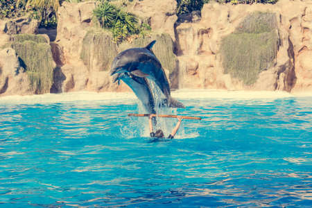 Zookeeper practicing with dolphins tricks in large pool. Foto de archivo