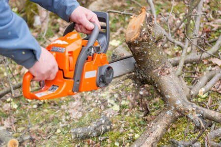 Worker using chain saw and cutting tree branches. Stock Photo