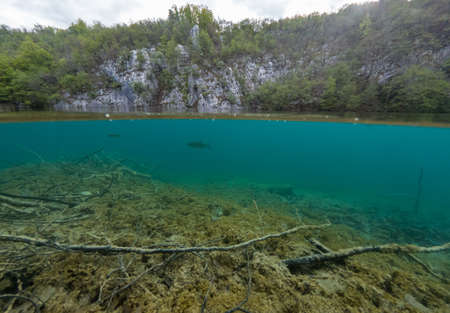 Split view of crystal clean water with flora and fauna.
