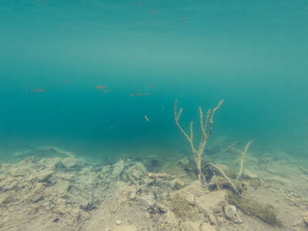 Underwater view of flora and fauna in fresh water lake. Plitvice lakes, Croatia.