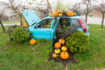 Many pumpings and plants invading old car outdoor. Stok Fotoğraf