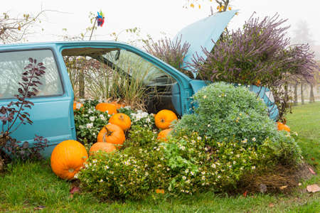 Many pumpings and plants invading old car outdoor. Stock Photo
