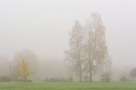 Foggy autumn landscape with leaves engulfed in warm colors. Stock Photo