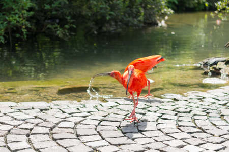 Exotic birds walking freely on path through local zoo. Banco de Imagens