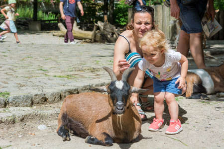 Mother and daughter exploring peting zoo with many goats. Banco de Imagens