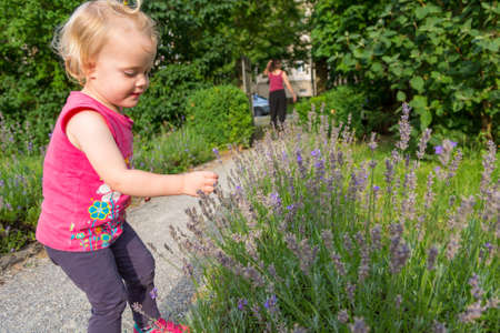 Cute blonde girl exploring garden and touching lavender. Banco de Imagens