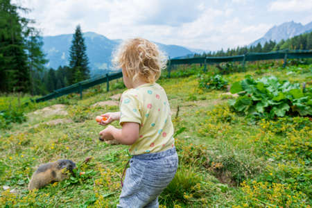 Cute blonde girl feeding marmots in petting zoo. Stock Photo