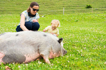 Mother and daughter stroking a big fat pig at mountain far.