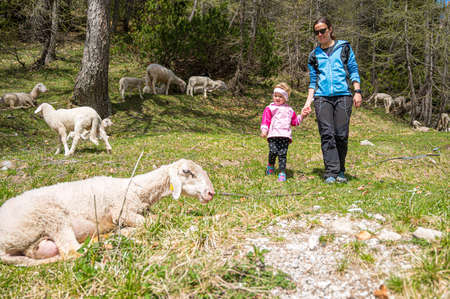Mother and daughter looking at flock of sheep in nature.