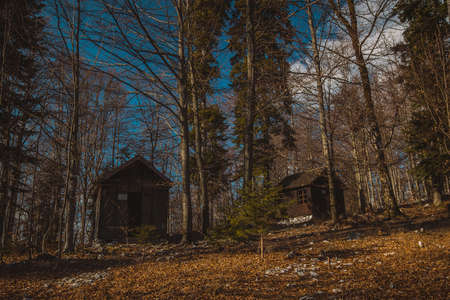 Old army barracks or cottages hiding in the depths of forest at Kocevje or Kocevski rog. Partisan hideout in Slovenia called Baza 20 on a sunny winter day. Visible two of cabins. Zdjęcie Seryjne