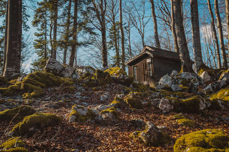 Old army barracks or cottages hiding in the depths of forest at Kocevje or Kocevski rog. Partisan hideout in Slovenia called Baza 20 on a sunny winter day. Visible one of cabins.