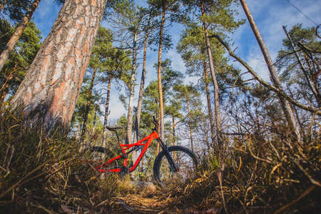 Enduro 27,5 mountain bike in red color resting on a bike single track in a forest on a sunny autumn day. Twigs and leaves in the foreground, blue sky in the background. Imagens