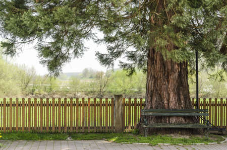 wood fence: Traditional bench in shade under the tree  Stock Photo