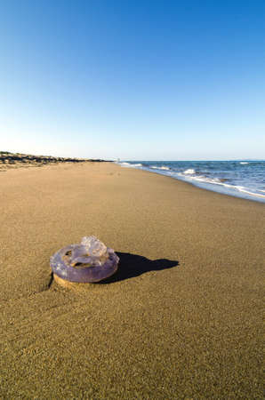 Jellyfish washed up on a sandy beach. photo
