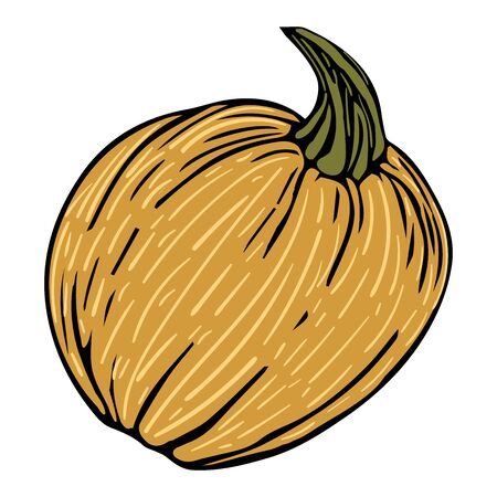 Decorative doodle pumpkin isolated vector illustration for design and decoration