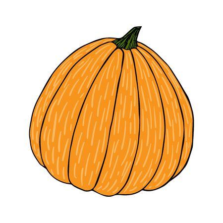 Pumpkin color sketch black line isolated on white background vector illustration for decoration and design