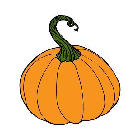 Pumpkin in color sketch black line isolated on white background vector illustration for decoration and design Illustration