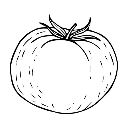 Tomato sketch black line isolated on white background vector illustration for decoration and design