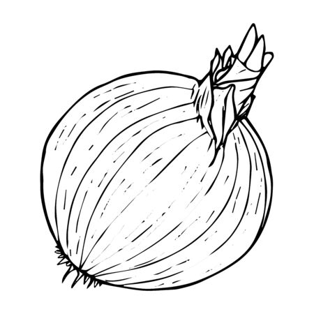 Onion vegetable sketch black line isolated on white background vector illustration for decoration and design