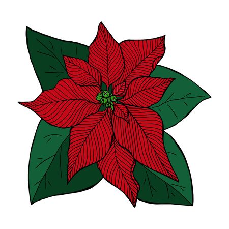Poinsettia red line sketch in color, christmas flower  vector illustration for design and decoration Stock Illustratie