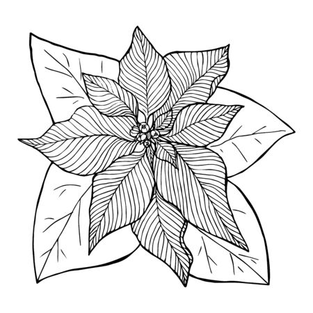 Christmas flower poinsetia sketch liner isolated on white background vector illustration for design and decoration
